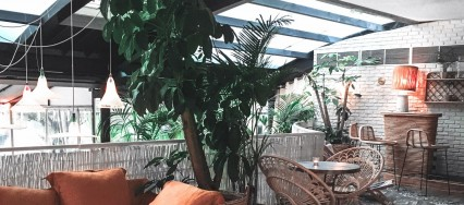House Plants for Sunroom